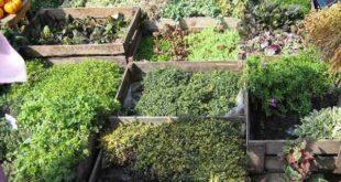 Почвопокровные виды растений