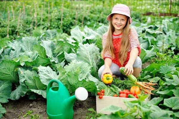 Полезная информация для начинающих садоводов